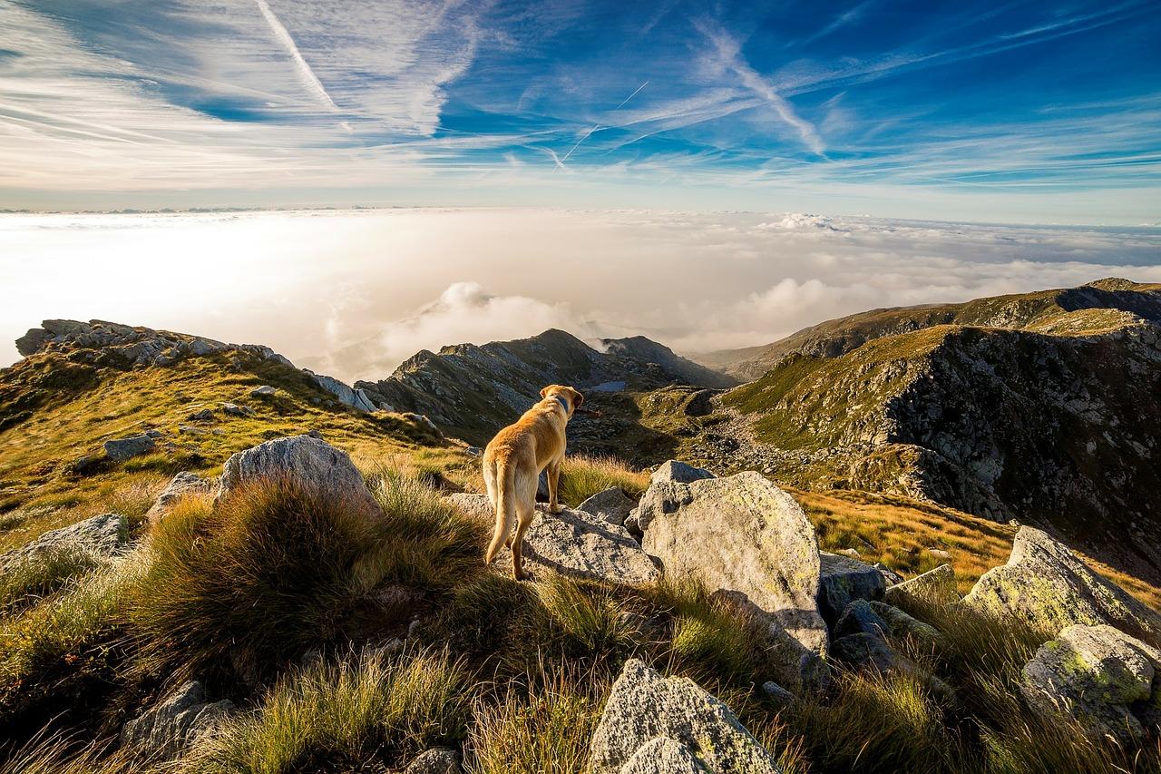 Dog labrador holiday walk in scenic hills