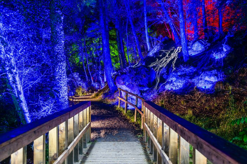 Enchanted Forest Faskally woods Pitlochry