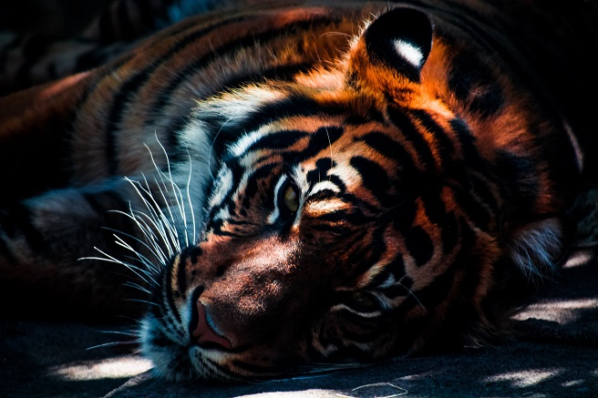 tiger mountain zoo wales holiday ideas uk