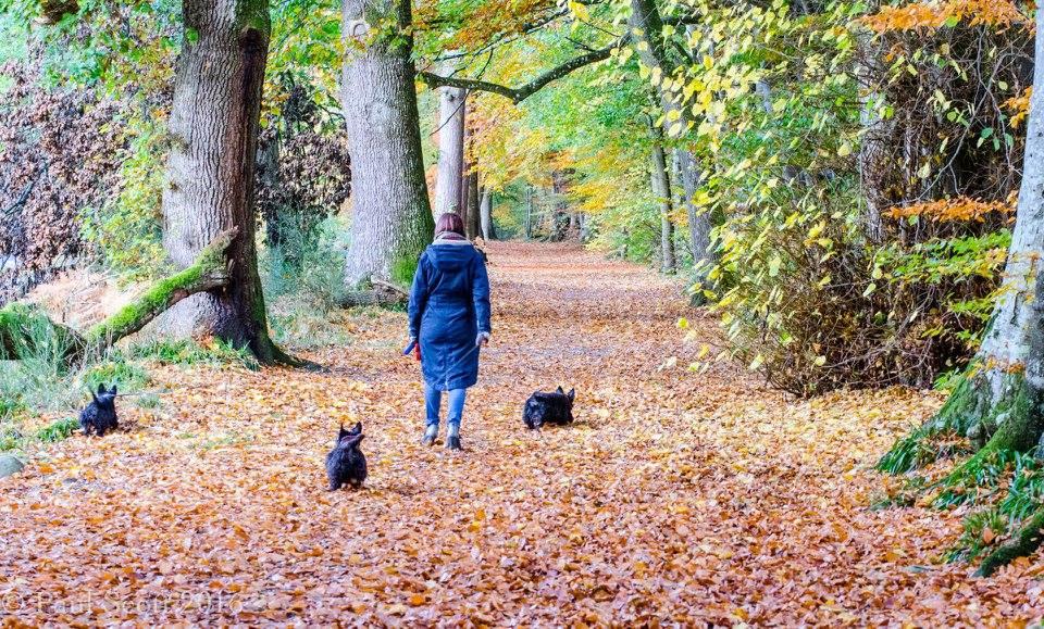 Gentle forest walk in Perthshire