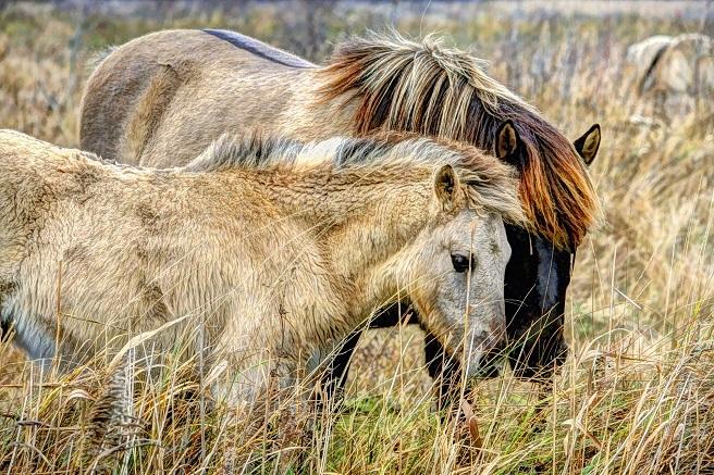 wild ponies northern ireland vacation ideas uk