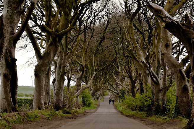 the dark trees northern ireland game of thrones holiday ideas